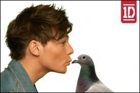 Quel est ce pigeon ?