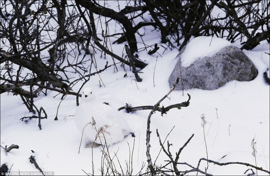 Quel animal voyez-vous sur cette photo ?