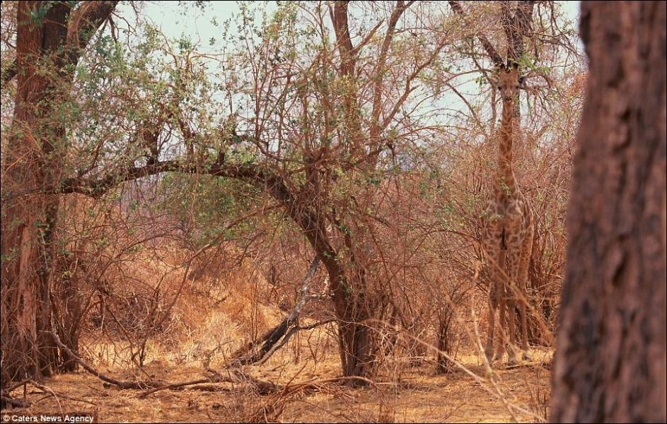 Dans ce paysage africain, découvrez-la !