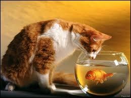 L'un des sept péchés capitaux ... pour ce petit chat.
