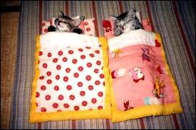 Juxtaposition de deux lits simples identiques côte à côte ...