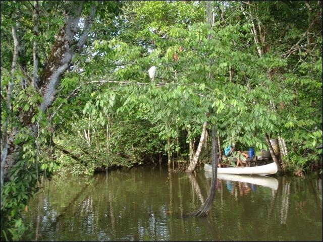 De ces trois animaux, lequel est herbivore et vit la plupart du temps dans un arbre, au-dessus de l'eau !