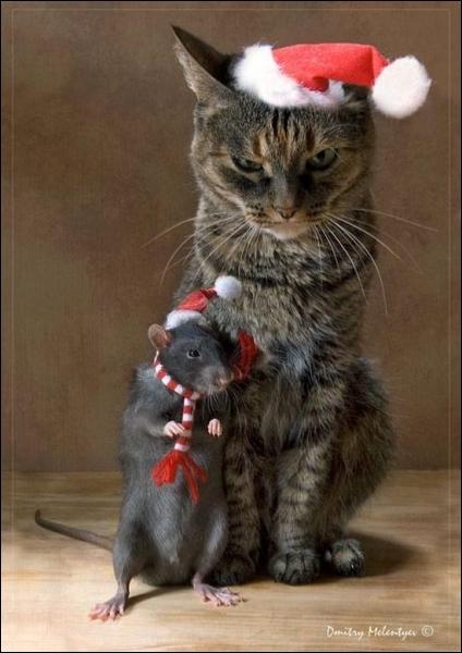 Ces deux-là n'ont pas l'air très frais, Noël a laissé des traces !