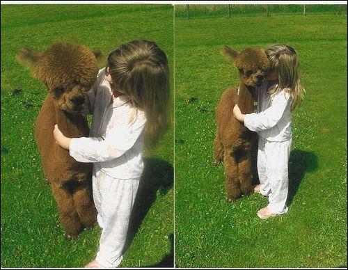 Pouvez-vous citer un animal qui appartient à la même famille que cet alpaca ?