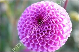 Quelle est la couleur de cette fleur ?