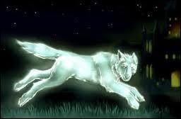 Le patronus de Tonks est un loup depuis 1996, pour quelle raison ?