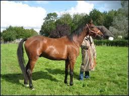 Et pour finir, quelle est la race de ce cheval ?