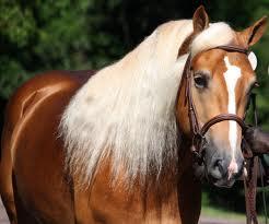 Les races et les robes des chevaux dans tous leurs états : )