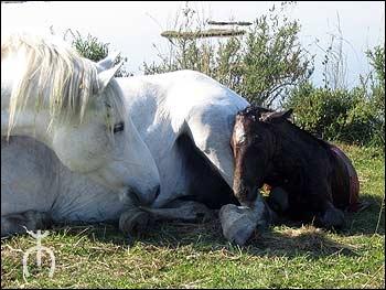 Quizz galop 1 2 quiz chevaux - Combien de temps dure les coups de soleil ...
