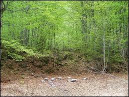 Quel est son but en venant dans la forêt ?