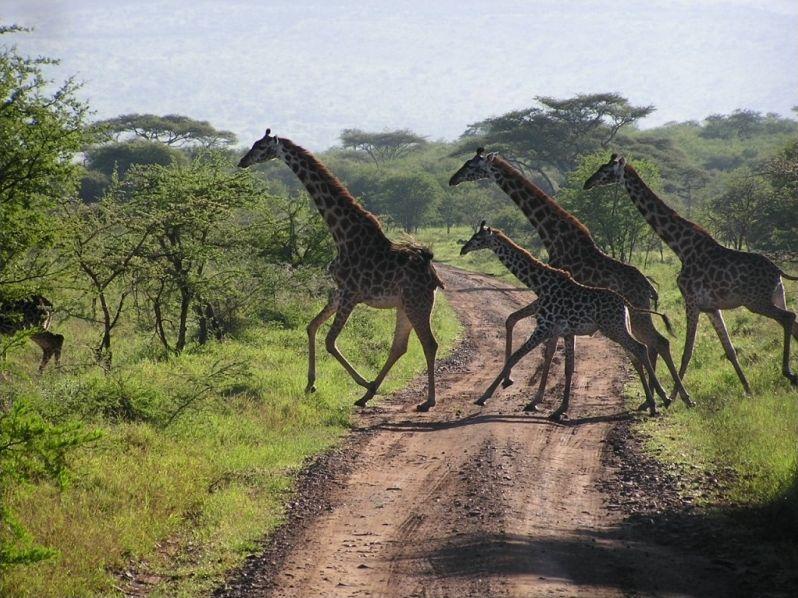 Balade en Afrique