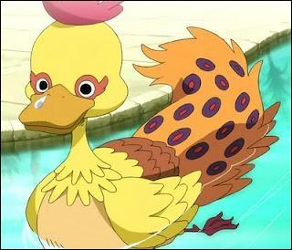 Comment se nomme ce canard ?