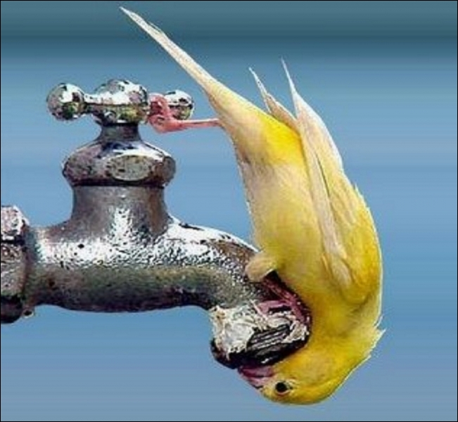 Quelle est la proportion d'eau contenue dans le corps d un être humain adulte en bonne santé ?