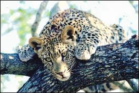 Quizz tout sur l 39 afrique du sud quiz geographie animaux - Quel est le plus grand port d afrique ...