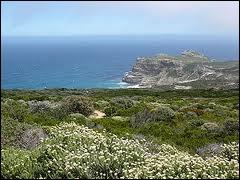 Quel terme signifiant buisson fin en afrikaans désigne la formation végétale naturelle caractéristique du sud de l'Afrique du Sud ?