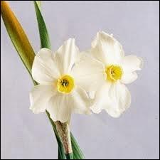 Fleur : je suis un personnage de la mythologie grecque. Mon nom est celui d'une fleur. Je suis :