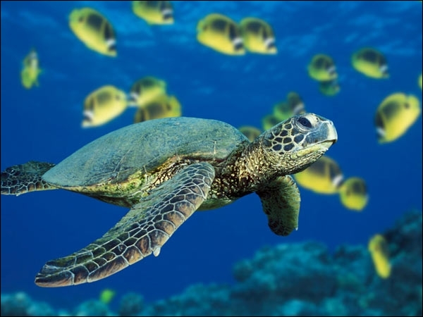 Comment dit-on  une tortue  en anglais ?