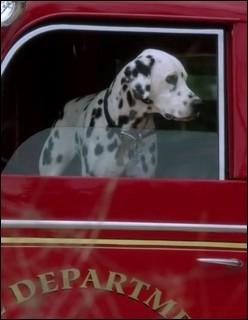 A Storybrooke, même Pongo est présent, échappé des 101 dalmatiens. A qui appartient-il ?