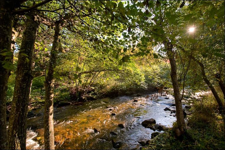 Il y a trois petites rivières dans la Limagne connues sous le nom de Couze, qui en langue celtique, signifie ruisseau. Où vont-elle se jeter ?
