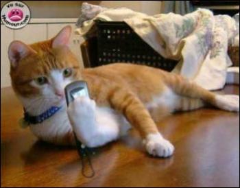 Cet animal est en train d'envoyer un message, mais de quel animal s'agit-il ?