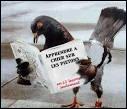 Il ne faut pas déranger ce pigeon car il...