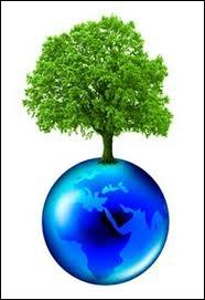 Écologie : qu'est-ce que l'écophysiologie ?