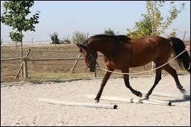 Où emmènes-tu ton cheval avant de le longer ?