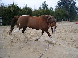 Comment arrêter un cheval à la longe ?
