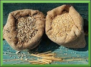 Les Romains mangeaient chichement. Ils préparaient une pitance avec des grains d'épeautre ou de froment torréfies et concassés, cuits dans de l'eau. A quel plat cela vous fait-il penser ?