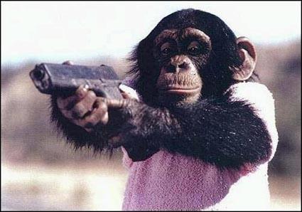 Pour qui se prend ce chimpanzé ?