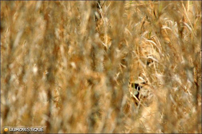 Qui se cache derrière les hautes herbes ?