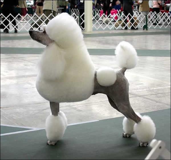 Bien-aimé Quizz Chiens de chasse - Quiz Chiens, Races de chiens, Chasse FD36