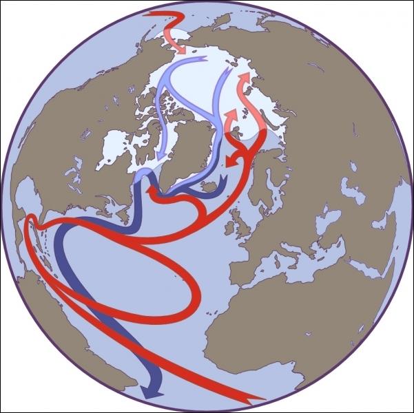Où le Gulf Stream, ce courant marin chaud et de surface, prend-il naissance ?