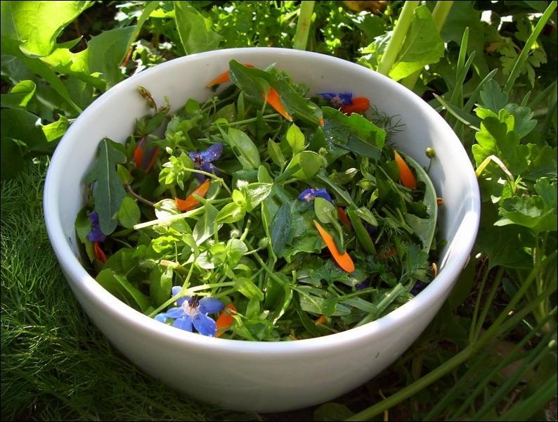 Cette plante riche en vitamine C est antiseptique, expectorante et diurétique. Elle fait partie des fleurs comestibles qui peuvent se déguster crues en salade. C'est ...