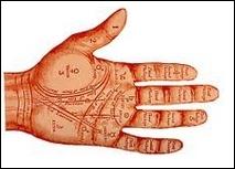 L'index représente l'aptitude au commandement, l'ambition, la sensualité, les penchants vers la religiosité; il est associé à :