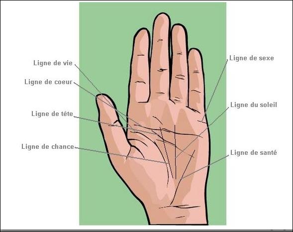 La main carrée, ou main utile, est le type de mentalité méthodique, type fonctionnaire, c'est la plus commune. Elle appartient à une catégorie d'hommes :