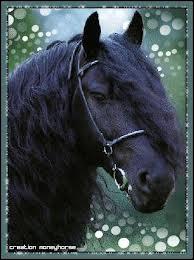 Quel est le nom de ce cheval ?