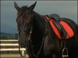 Comment s'appelle ce cheval qui a été tué par Véronica ?