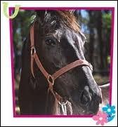 Comment se nomme ce cheval pur sang appartenant à Lisa ?