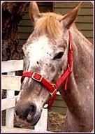 Comment s'appelle ce vieux cheval ?