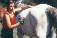 Quand faut-il panser son cheval ?