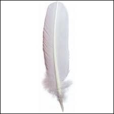 Quelle est cette plume ?