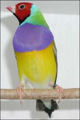 Quelle est cette espèce d'oiseau ?
