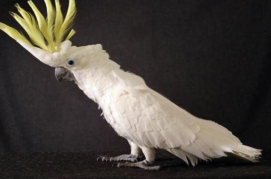 Les espèces d'oiseaux