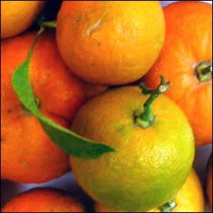 Quel est cet arbre qui donne des fruits peu charnus et amers utilisés pour la confiture ?