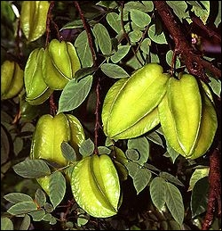 A quel arbre appartiennent ces feuilles et fruits ?
