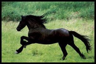 De quelle race est ce cheval?
