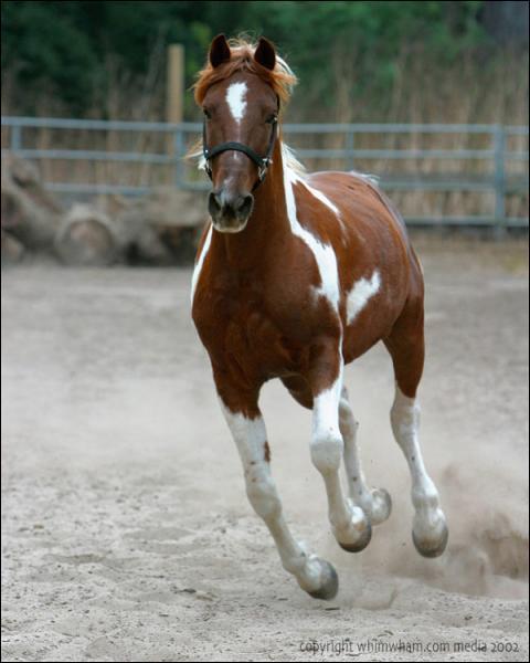 De quel race est ce cheval?