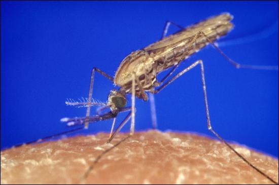 Quel parasite est à l'origine du paludisme ?