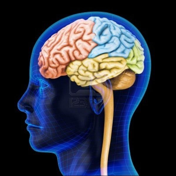 Quel est le pourcentage des régions qu'on utilise dans notre cerveau ?